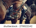 Stock photo sports horses in ammunition before competitions portrait of a sports stallion riding on a horse 270022142