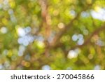 Green Bokeh Natural Background