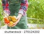tomatoes harvest | Shutterstock . vector #270124202