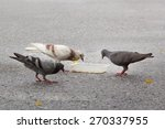 pigeons eating food on a street. | Shutterstock . vector #270337955