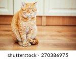 Peaceful Orange Red Tabby Cat...