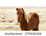 portrait of a brown icelandic... | Shutterstock . vector #270436106