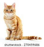 Stock photo portrait of red cat isolated on white 270459686