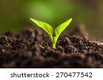 small green plant. seedling... | Shutterstock . vector #270477542