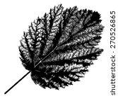 autumn  leaf  on white... | Shutterstock .eps vector #270526865