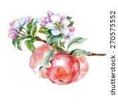 Watercolor  Apple Tree Branch...