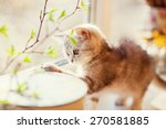 Stock photo cute little kitty playing with green leaves 270581885