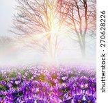 saffron geyfelya first... | Shutterstock . vector #270628226