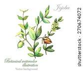 watercolor vector botanical... | Shutterstock .eps vector #270674072
