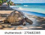 Stock photo seychelles giant tortoise 270682385