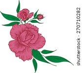 vector drawing of pink rose | Shutterstock .eps vector #270710282