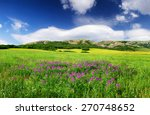 Field With Flowers In Mountain...