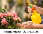 Male florist spraying flowers in flower shop. - stock photo