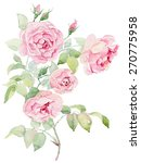 Stock photo watercolor painting pink roses on white background 270775958