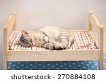 Stock photo a cat sleep on colorful bed 270884108