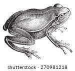 Frog  Vintage Engraved...
