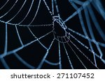 Spider Web Close Up In The Dark