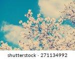 retro photo of white magnolia... | Shutterstock . vector #271134992