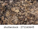 Dry Brown Leaves In The Forest