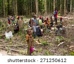the jungle  indonesia   january ... | Shutterstock . vector #271250612