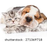 Stock photo sleeping basset hound puppy hugging tabby kitten isolated on white background 271369718