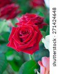 Stock photo red and white roses in garden 271424648