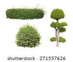 bush on white background  ... | Shutterstock . vector #271557626