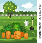 carrots  vegetable garden ... | Shutterstock .eps vector #271560542