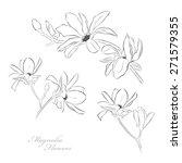 magnolia flowers   Shutterstock .eps vector #271579355