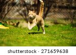 Stock photo running cat 271659638