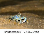 The Horned Ghost Crab Or Horn...
