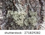 Green Lichen On Tree Bark Clos...