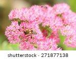 Closeup Of A Bee Enjoying The...