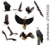 bald eagles isolated on the...