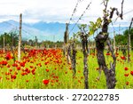 Bright Red Poppies In A...