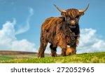 horned highland cattle graze in ... | Shutterstock . vector #272052965