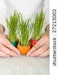 Woman hands holding easter eggs having grass sprouting from them - spring concept - stock photo