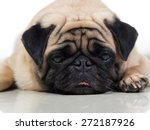 Sad Looking Pug Dog Good For...