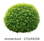 bush trimmed into round shape | Shutterstock . vector #272243258