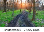 Dirt Road In Spring Forest...