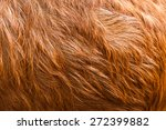 Macro  Brown Goat Hair .macro...