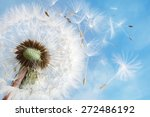 Dandelion Seeds In The Morning...