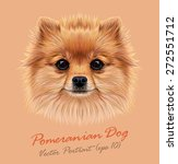 Pomeranian Spitz Dog Animal...