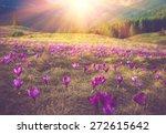 first spring flowers crocus as... | Shutterstock . vector #272615642