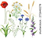 Wildflowers Set. Poppy ...