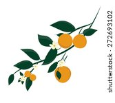 Orange Fruits On Branches....