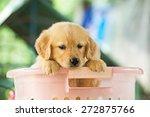 pet | Shutterstock . vector #272875766