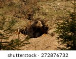 a brown bear in the forest. big ... | Shutterstock . vector #272876732