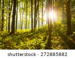 forest trees. nature green wood ... | Shutterstock . vector #272885882