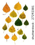 Autumn Birch Yellow Leaves...